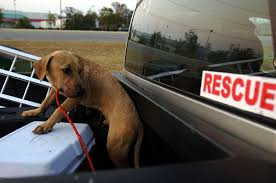100 Truck Dog Oregon House Bill Would Prohibit Unsecured S Riding In Back Of