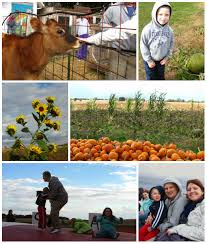 Moore Pumpkin Patch Tyler Tx by Oliver U0027s Journey A Look Back At 2013 October