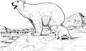 Galería de imágenes Dibujos de osos para colorear