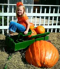 Pumpkin Patch Louisiana by Woodcrest Pumpkin Patch Opens To The Public Beaumont Enterprise