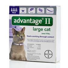 flea treatment for cats advantage ii for cats cat flea treatment petsolutions