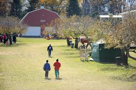 Pumpkin Patch Near Caledonia Mi by Hayrides Pumpkin Slingshots And More Your Guide To Fall Fun In
