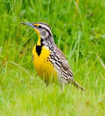 List Of Birds Wyoming