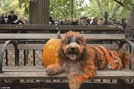 Winnie The Pooh Pumpkin Painting by Hundreds Of Dogs Dress Up For 25th Halloween Parade In New York