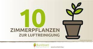 10 zimmerpflanzen zur luftreinigung