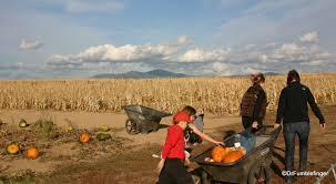 Pumpkin Patch Near Tacoma Washington by Washington Drfumblefinger U0027s Adventures Of A Lifetime