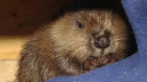 sendung verpasst wildes wohnzimmer otter an bord vom 16 04