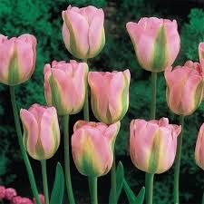 best 25 brecks wholesale ideas on shade flowers