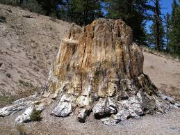 florissant fossil beds national monument go hike colorado