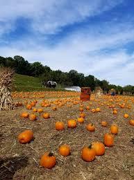Pumpkin Patch Cincinnati by The Mom U0027s Guide To Neltner U0027s Farm Fall Festival