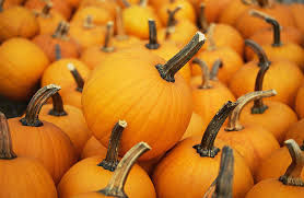 Pumpkin Patch Mobile Al 2015 by Pumpkin Patch Pickings A Guide To Pumpkin Farms Wcco Cbs