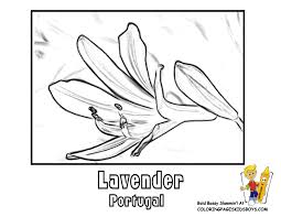 Portugal Lavender At YesColoring Coloring Spring Flower Picture