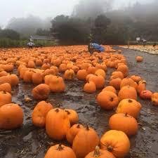 Half Moon Bay Pumpkin Patch 2017 by Farmer John U0027s Pumpkin Farm 75 Photos U0026 74 Reviews Pumpkin