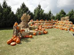 Pumpkin Patch Bastrop County by The Best Pumpkin Patches In Texas The Brilliant Balance
