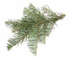 Types Christmas Trees Most Fragrant by Top 10 Real Christmas Trees List