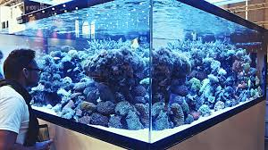 Aquascaping Ideas From Interzoo2016 - YouTube Is This Aquascape Ok Aquarium Advice Forum Community Reefcleaners Rock Aquascaping Contest Live Rocks In Your Saltwater Post Your Modern Aquascape Reef Central Online There A Science To Live Rock Sanctuary 90 Gallon Build Update 9 Youtube Page 3 The Tank Show Skills 16 How Care What Makes Great Large Custom Living Coral Aquariums Nyc
