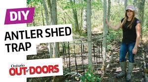 Deer Antler Shed Trap by Diy Antler Shed Trap Youtube