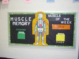 Best 25 Science Bulletin Boards Ideas On Pinterest