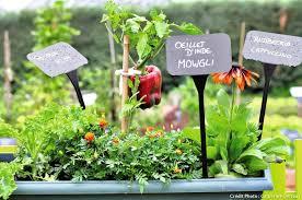 potager balcon légumes potager détente jardin
