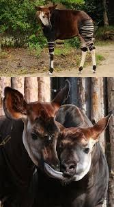 Cincinnati Zoo Halloween by Meet The Cincinnati Zoo U0027s Cast Of Characters Just In Time A Spring