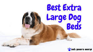 Extra Large Orthopedic Dog Bed by These Are The Best Extra Large Dog Beds You Can Buy Pet Lovers World