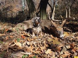 Shed Hunting Utah 2014 by Pennsylvania Bill To Allow Hunting With Blood Trailing Dogs Stalls
