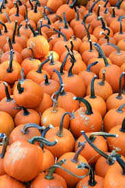 Mission Valley Pumpkin Patch by Live Oak Canyon Pumpkin Patch In Yucaipa California Through My Lens
