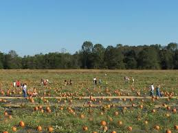 Pumpkin Farms In Georgia by Pumpkin Patch Picture Of Washington Farms Watkinsville