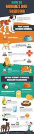 Do Bullmastiffs Shed A Lot by Best 25 Dog Training Ideas On Pinterest Puppy Care Dog