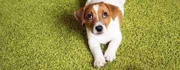 Dog Urine Wood Floors Vinegar by 100 Dog Urine Hardwood Floors Vinegar 100 Dog Urine Wood