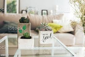 verschiedene pflanzen kakteen und andere in töpfen auf dem tisch im wohnzimmer im hinteren teil der burg gibt es einen gewaschenen sofa und gemälde
