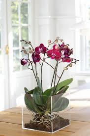 les fleurs d intérieur les orchidées en 40 images orchid