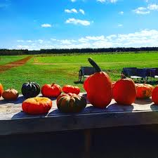 Pumpkin Picking Long Island Ny by Apple Picking At The Milk Pail