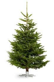 Popular Christmas Tree Species by Cornell Farm Christmas Trees U2014 Cornell Farm
