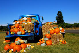Pumpkin Patch Medford Oregon by Racial Stereotypes In The Media Essay Professional Papers Editor