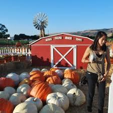 San Jose Pumpkin Patch 2017 by Spina Farms Pumpkin Patch 366 Photos U0026 125 Reviews Pumpkin