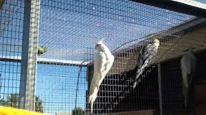 Cockatiels In Outdoor Aviary - YouTube Gallery Interior Design Center Cages Aviaries The White Finch Aviary Small Spaces Bathroom Organizing And Decor Artful Attempt Twin Farms Bnard Vermont Luxury Resort Cockatiels In Outdoor Youtube Just Property House For Sale Hill Plants Pinterest Majestic Custom Hickory Nursing Home Zoo Berlins New Bird House Dinosaurpalaeo Bird Big Screen Tv Cabinets On Idolza How To Build Indoor Finch Aviary Yahoo Image Search Results