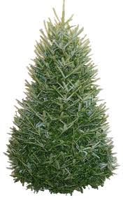 Fraser Fir Christmas Trees Delivered by Carolina Fraser Fir Company Fraser Fir Christmas Trees Wreaths