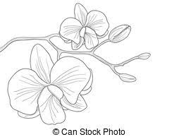 Orchid Clipart and Stock Illustrations 10 034 Orchid vector EPS