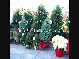 Christmas Tree Species For by Christmas Tree Wonderland Dallas Texas Youtube