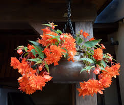 Full Size Of Orange Flowers Hanging Soilflower Pot With Wrought Iron Chain Decoration For Rustic