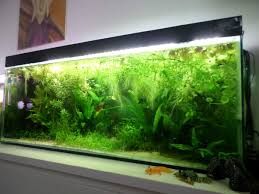 Aquascaping Idea - Caudata.org Home Accsories Astonishing Aquascape Designs With Aquarium Minimalist Aquascaping Archive Page 4 Reef Central Online Aquatic Eden Blog Any Aquascape Ideas For My New 55g 2reef Saltwater And A Moss Experiment Design Timelapse Youtube Gallery Tropical Fish And Appartment Marine Ideas Luxury 31 Upgraded 10g To A 20g Last Night Aquariums Best 25 On Pinterest Cuisine Top About Gallon Tank On Goldfish 160 Best Fish Tank Images Tanks Fishing