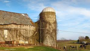 Farms: Evening Barn Richmond Horses Broadacre Twigs Farm Old ... Old Red Farm Barn With Concrete Silo Stock Photo Picture And Yellow With Canada Suzanne Berton Cute And Free Clip Art Barn Silo Donnasdesigns Cornfield A Silos In Rural Wisconsin Filered A Panoramiojpg Wikimedia Commons Image 21504700 Beautiful White 113806882 Shutterstock Photos Images Alamy Barns J F Mazur Fine Studio Playhouse Plan 300ft Wood For Kids Pauls Clipart 33