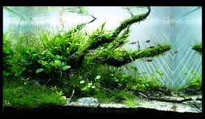 Aquarium | Aquarium | Pinterest | Aquascaping And Aquariums 329 Best Aquascape Images On Pinterest Aquarium Ideas Floratic Visiting Paradise At Shah Alam Planted Aquarium Aquascape Things Aquariums Aquascaping Malaysia Diy Pertama Kali Aquascaping October 2010 Of The Month Ikebana Aquascaping World Sumida Aquarium Reloaded Fish Tanks And Designs Awesome A Moss Experiment Its All About Current Low Tech Tank Cuisine Wonderful Small Cubical Styles Planted The Surreal Submarine Amuse