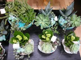 entretien plante grasse d interieur plantes d intérieur cactus et plantes grasses ferme bédard blouin