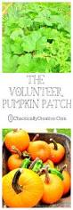 Pumpkin Patch Memphis Tennessee by The Volunteer Pumpkin Patch Chaotically Creative