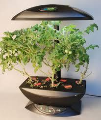 aerogarden customer service support my tomatoes grown up