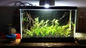 stabilizing your dirted aquarium