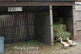 Pet Shed Promo Code June 2017 by Raising Backyard Chickens Stacy Risenmay
