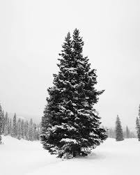 Artificial Layered Noble Fir Christmas Tree by Weekend In Aspen Damsel In Dior